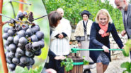 This Weekend: Wine Festival at Grébovka