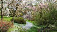 The Botanical Garden in Prague Reopens. Visitors Must Wear Face Masks