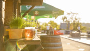 Beer Garden Karlín, The New Hotspot in Town