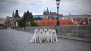 Pictures of the Day: Five Swiss Shepherds on the Charles Bridge