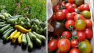 Fresh-From-The-Farm: This Local Producer Delivers Products to Prague City Center