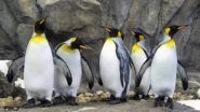 Prague Zoo to Celebrate World Penguin Day With Rich Program
