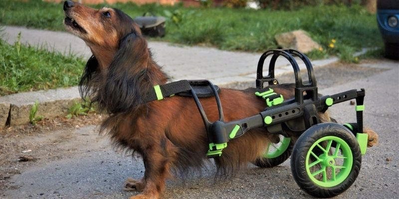 wheelchair for dogs czech